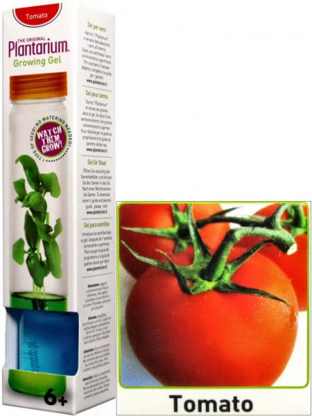 Plantarium Tomate